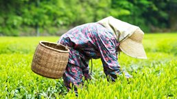 Strengthening Japanese agriculture to maximize global reach