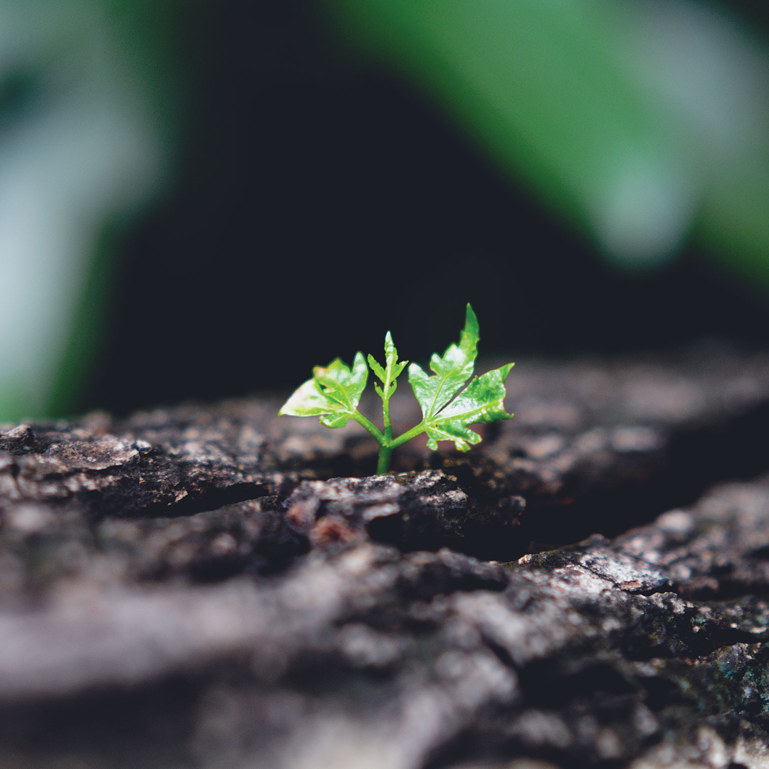 Growth leadership | Marketing & Sales