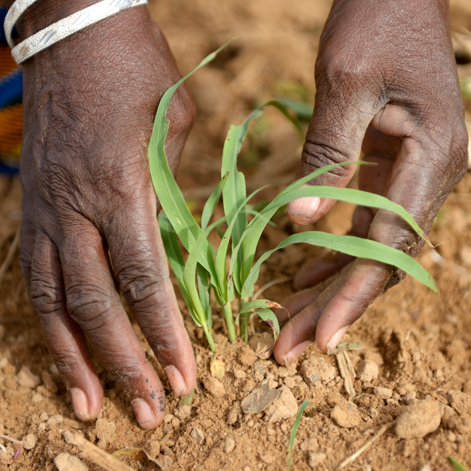 Winning in African agriculture   McKinsey