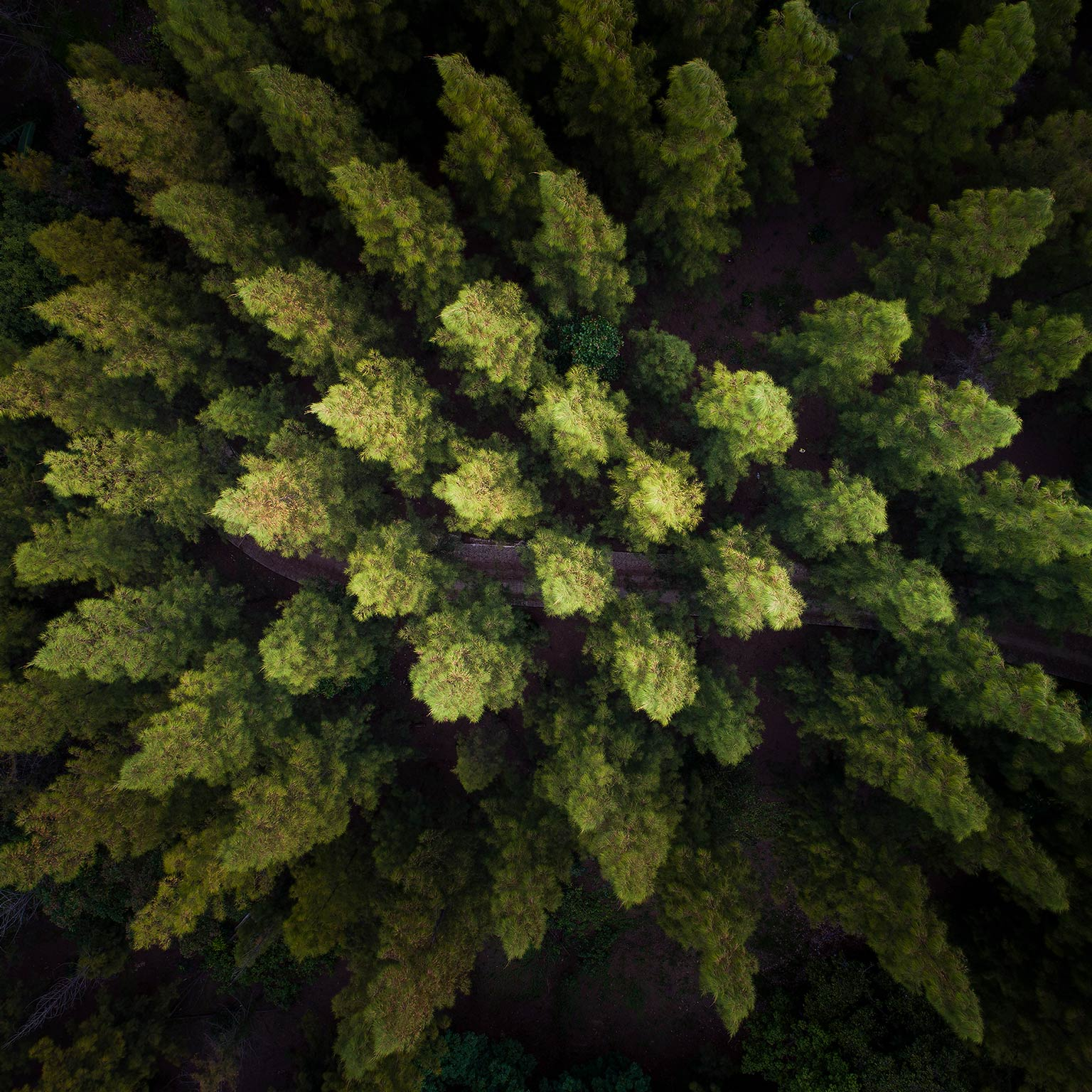 The precision forestry revolution | McKinsey