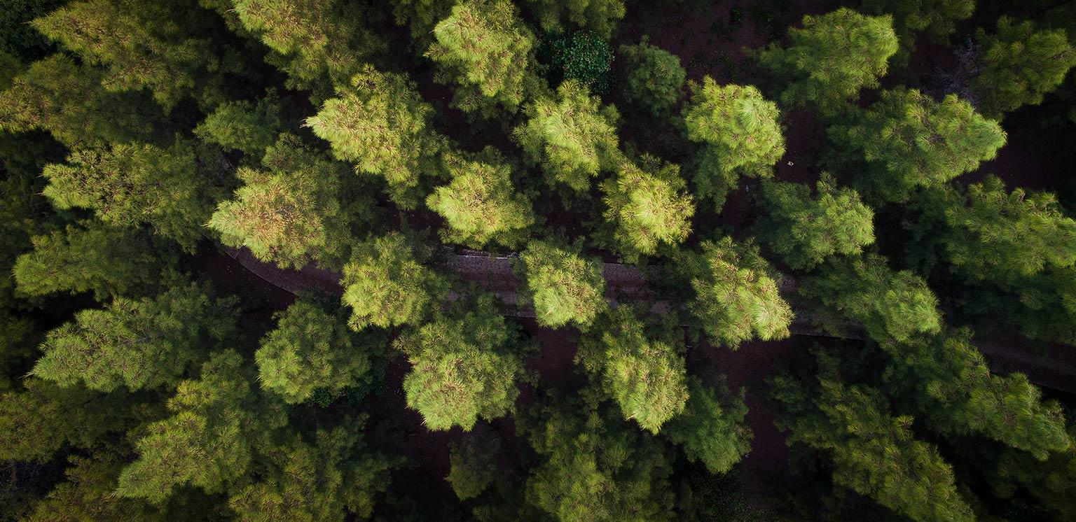 Precision forestry: A revolution in the woods