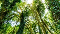 Sustaining sustainability: What institutional investors should do next on ESG